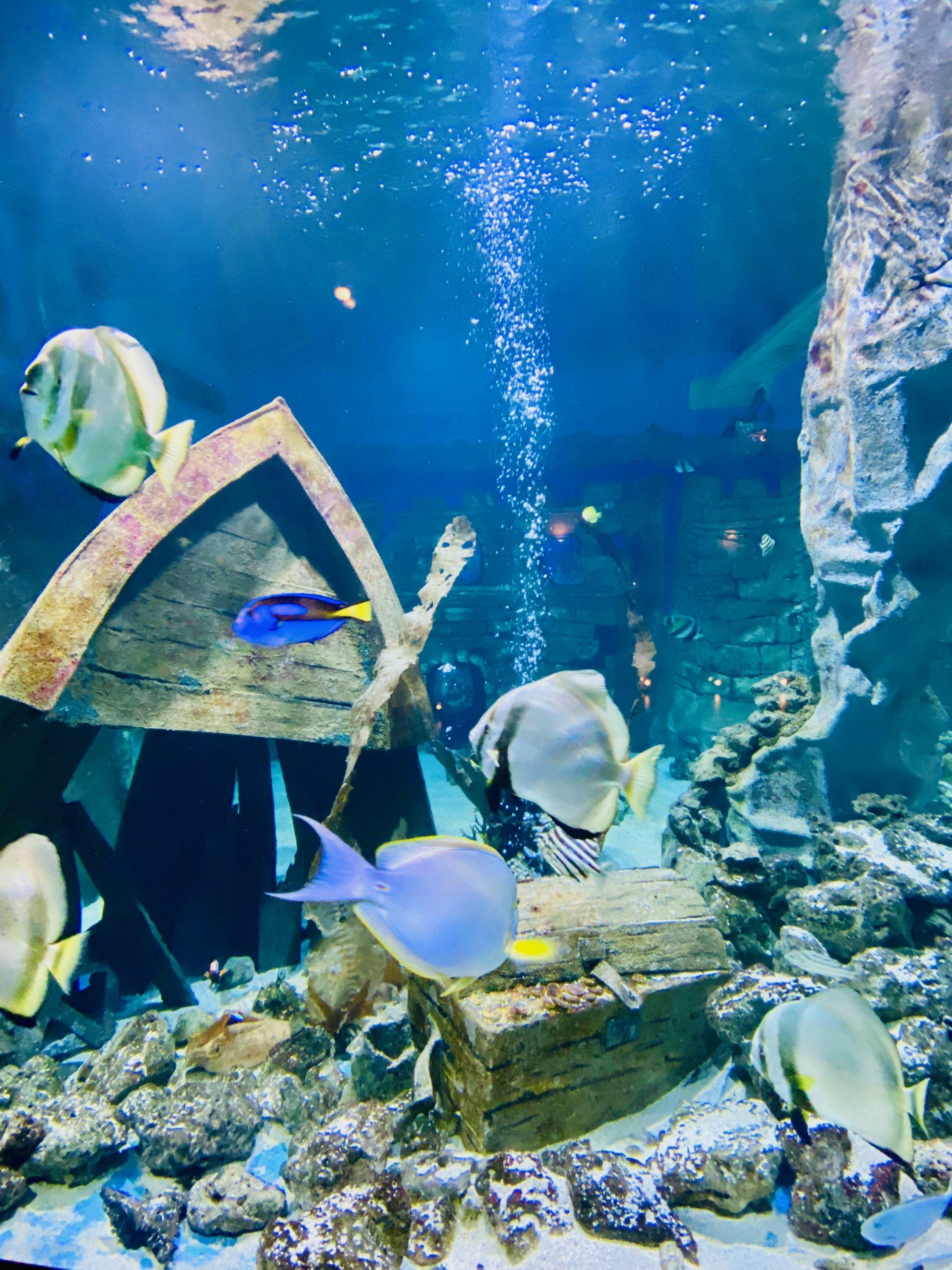 Das La Mer Aquarium